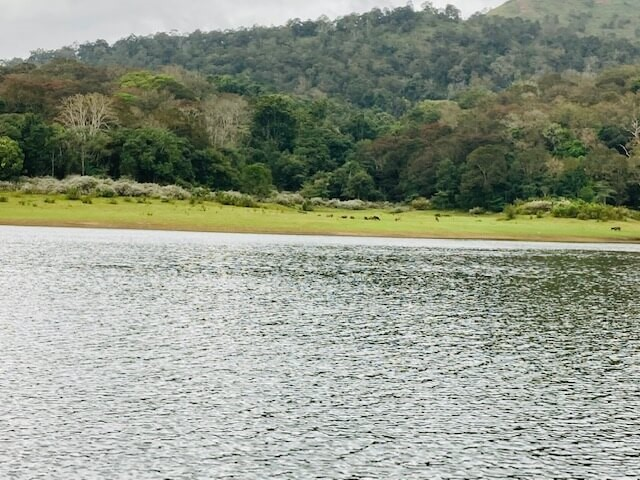 Best Places to See in Thekkady for a Perfect Holiday